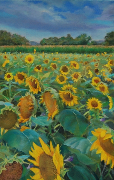 """Sunflowers at Poplar Grove"", pastel $750"