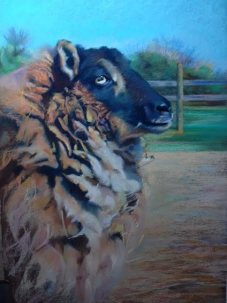 """Ready for Shearing"", pastel, $750"