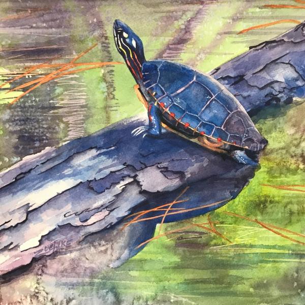 Blue-Turtle