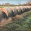 What the Hay, pastel by Evie Baskin