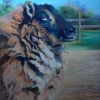 """""""Ready for Shearing"""", pastel, $750"""