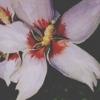 clarkflower2